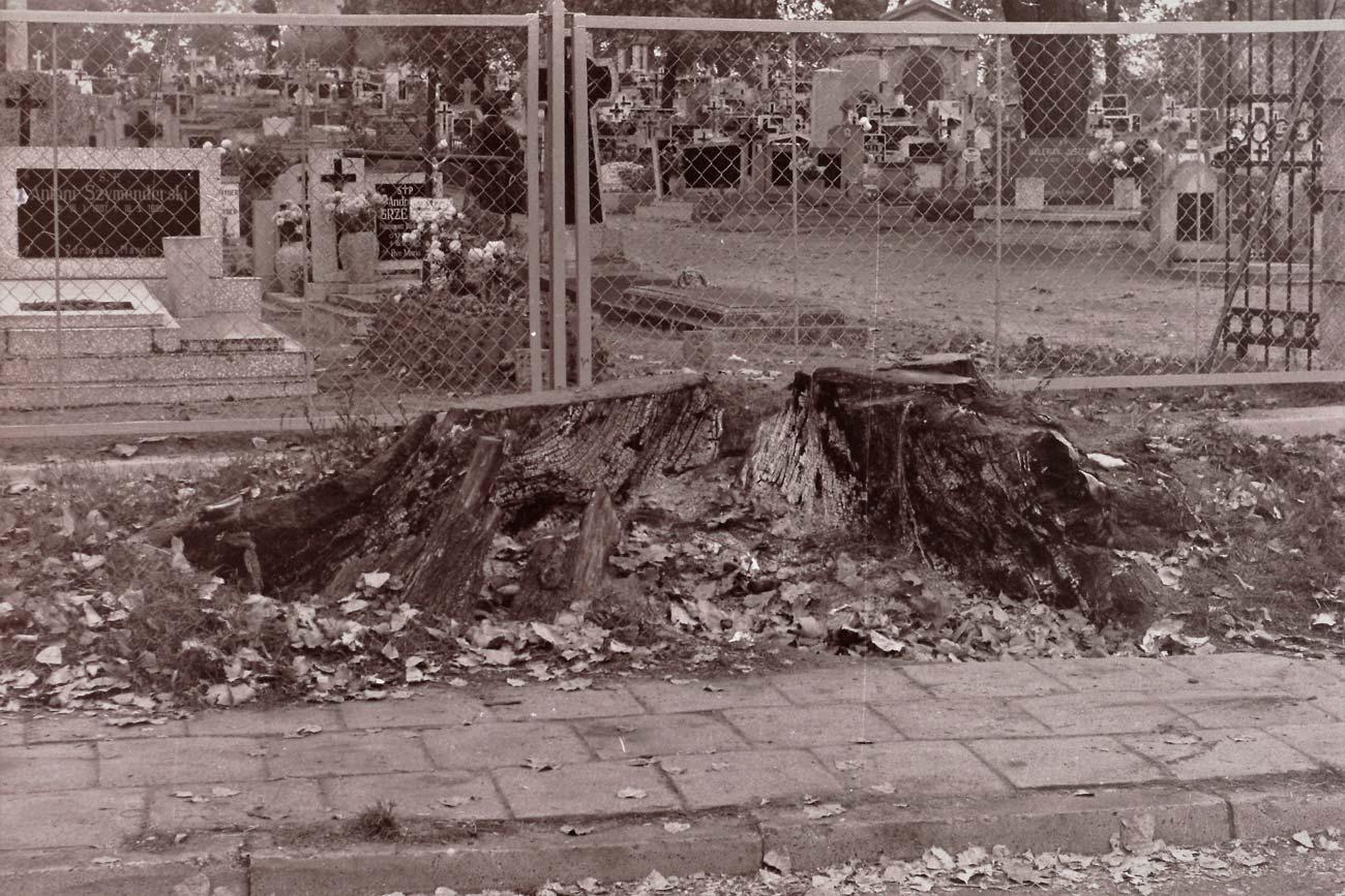 Cmentarz Kórnik - 11